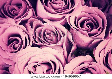 Purple vintage roses background retro style process.
