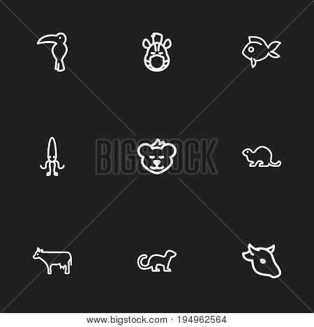 Set Of 9 Editable Zoology Icons. Includes Symbols Such As Calamary, Beaver, Cougar And More. Can Be Used For Web, Mobile, UI And Infographic Design.