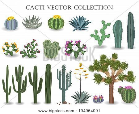 Cacti vector collection. Saguaro agave joshua tree prickly pear and other cactuses