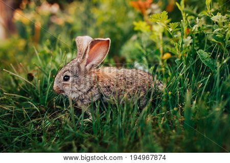 Little rabbit on the grass farm of pets.