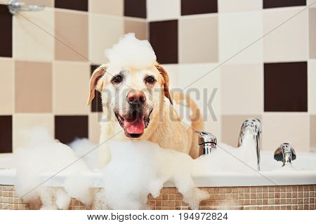 Dog Taking A Bath