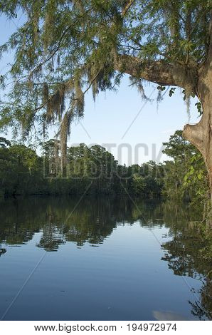 Spanish Moss hangs from a tree overlooking Tranters Creek in WashingtonNorth Caroina