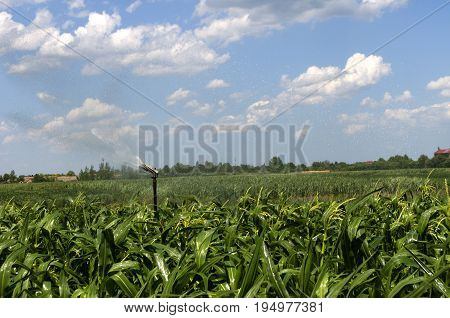 Watering corn with water cannon on sunny day