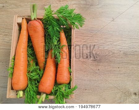 Fresh carrots lie on the background of greenery for salad. Four carrots lie in a box with greens for salad. A wooden box stands on a light parquet floor.
