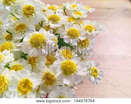 Beautiful flowers of daisies on a light background. Beautiful chamomiles are on the floor. A bouquet of chamomiles close-up.