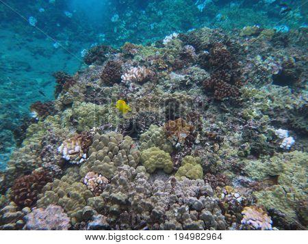 Sea Life Of Molokini Crater, Maui, Hawaii.