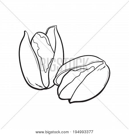 Two black and white pistachio nuts, hand drawn sketch style vector illustration isolated on white background. Realistic hand drawing of pistachio nuts, vegetarian snack