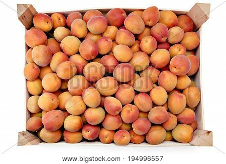 Pile of juicy ripe organic apricots in a wooden box, crate, on a white background