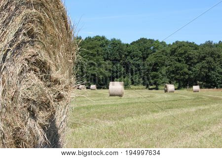 Hay bales on meadow in summer with blue sky with flowers and village