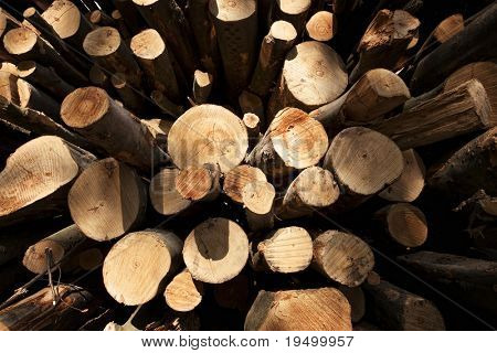 Close up of stack of cut tree trunks with annual rings visible, distorted wide angle view.
