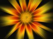 orange and red daisy explosion like the sun poster