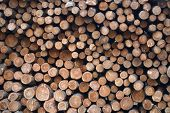 lumber yard wood stack woodpile forest industry material tree background poster