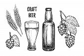 Hand drawn vector illustration - Craft beer (malt hop beer glass bottle). Octoberfest or beer fest. Design elements in engraving style. Perfect for invitations greeting cards posters prints poster