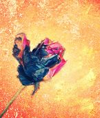 Pink rose fade from fire on grungy vintage background. poster