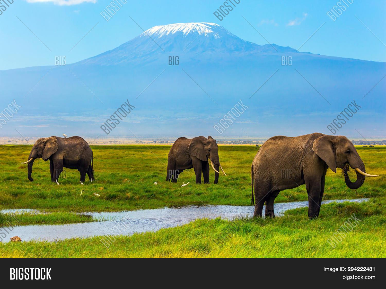 Safari - Tour Famous Image & Photo (Free Trial) | Bigstock