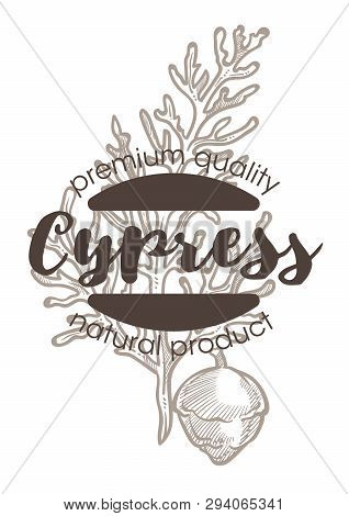 Cypress Plant Spice And Herbs Isolated Icon With Lettering