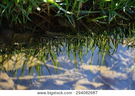 Grass Reflexion In The River And Blue Sky