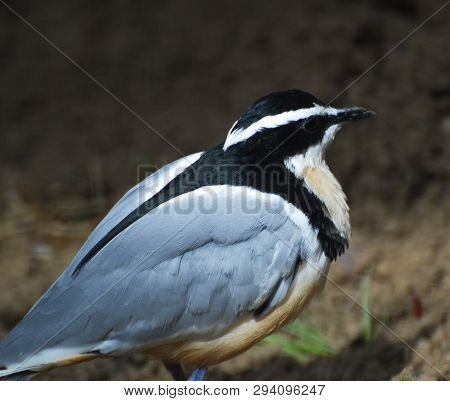 Close Up Of Black, Grey, Yellow And White Small Bird