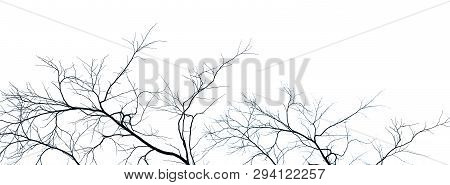 Dead Tree And Branch Isolated On White Background. Black Branches Of Tree Backdrop. Nature Texture B