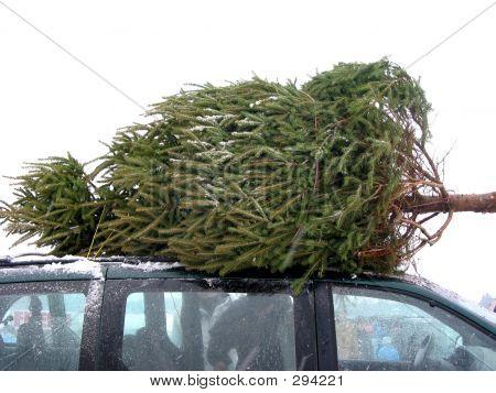Huge Christmas Tree