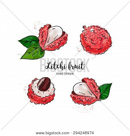 Litchi Fruit Drawing, Lychee. Watercolor Litchi On A White Background. Vector Illustration