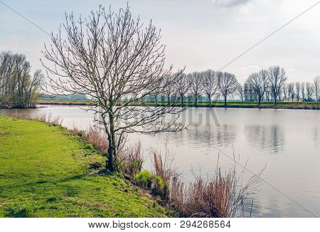 Backlit Image Of A Tree With Bare Branches On The Edge Of A Lake. The Phot Was Taken Near The Villag