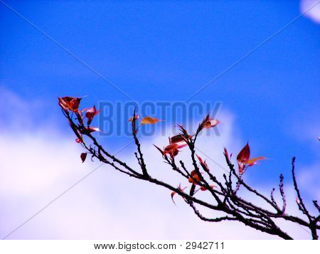 Fresh Leaves With Blue Sky At Background