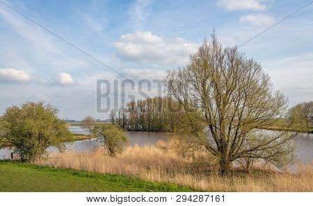 Budding Leaves On The Twigs And Branches Of A Tree On The Edge Of A Dutch Lake. The Spring Season Ha