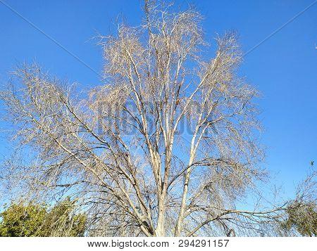 Rama De árbol Sin Hojas En El Parque De Isla Cristina Provincia De Huelva, España