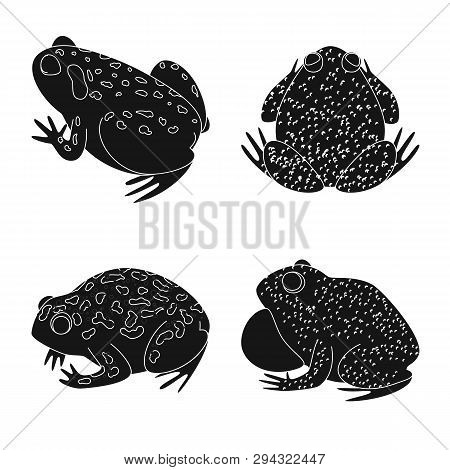 Isolated object of fauna and reptile icon. Collection of fauna and anuran stock symbol for web. poster