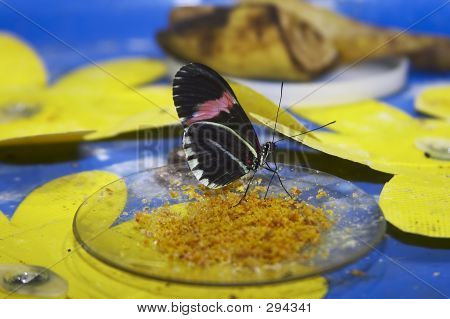 tropical butterfly poster