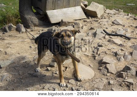 Pathetic hungry domestic dog on a chain near a kennel. Pets poster