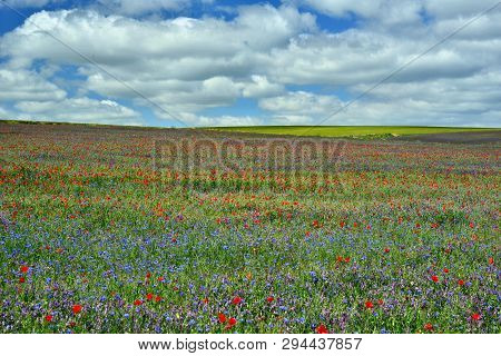Spring Landscape; Explosion Of Colors In The Fields Of Soria