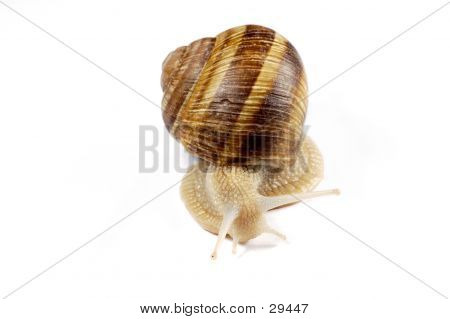 Isolated Snail
