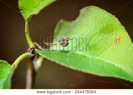 A Close Up Of A Spider On A Plant