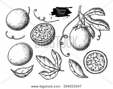 Passion Fruit Vector Drawing Set. Hand Drawn Tropical Food Illustration. Engraved Summer Passionfrui