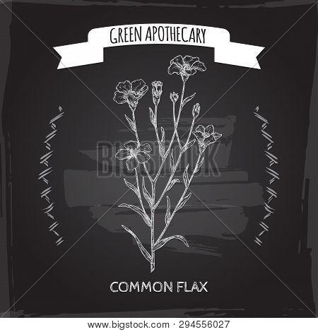 Linum Usitatissimum Aka Common Flax Sketch On Black. Green Apothecary Series.