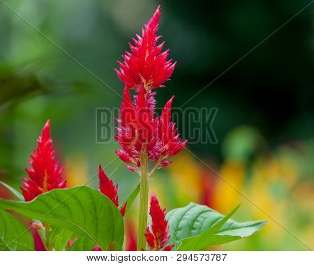 Flora Summer Garden Red Astilbe Stalks Green Background
