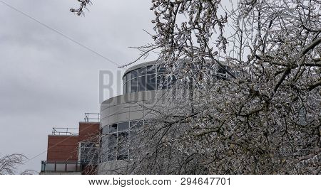 Icicles Of Freezing Rain On Tree Brenches With Office Building On The Back