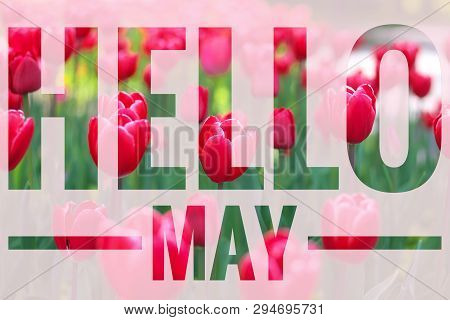 Banner Hello May. Welcome Picture. New Month. Warm Month. The Month Of May. Spring Month.