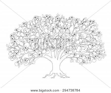Outline Illustration Apple Tree With Leaves, Apples And Blossom For Adult Or Kid Coloring Book, Tuto