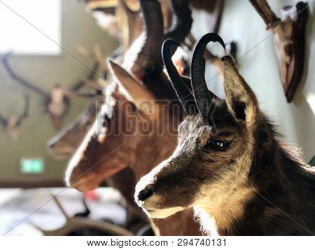 Stuffed animal heads mounted on a wall