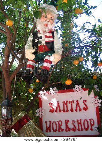 Elf  In  An Orange Tree