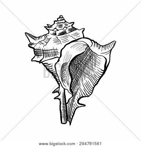 Angular Murex Seashell Hand Drawn Illustration. Seashore Conch, Mollusk Monochrome Sketch. Freehand