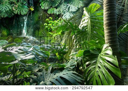 Dense tropical jungle foliage background