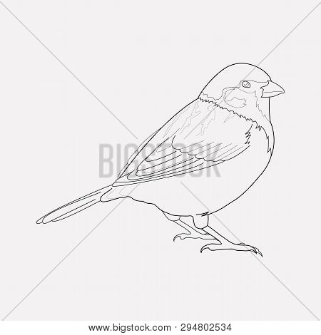 Sparrow Icon Line Element. Vector Illustration Of Sparrow Icon Line Isolated On Clean Background For
