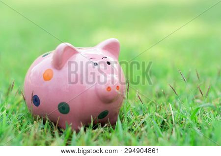 Piggy Bank On Green Grass With Sun Light In The Morning, Select Focus
