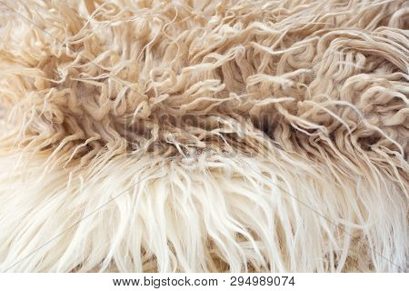 White Soft Wool Texture Background, Cotton Wool, Light Natural Sheep Wool, Close-up Texture Of White