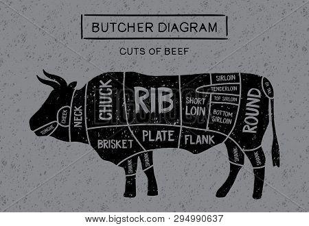 Poster Butcher Diagram And Scheme Of Meat Steaks: Brisket, Shank, Rib, Plate, Flank, Sirloin, Shortl