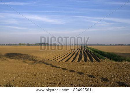 Barren field near the Dutch village Hank with the shadoe of a tree projected on it poster